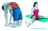 ¿Quieres saber qué músculo estiras cuando haces un determinado estiramiento? 36 imágenes te lo explican perfectamente via @beyoungbegreen